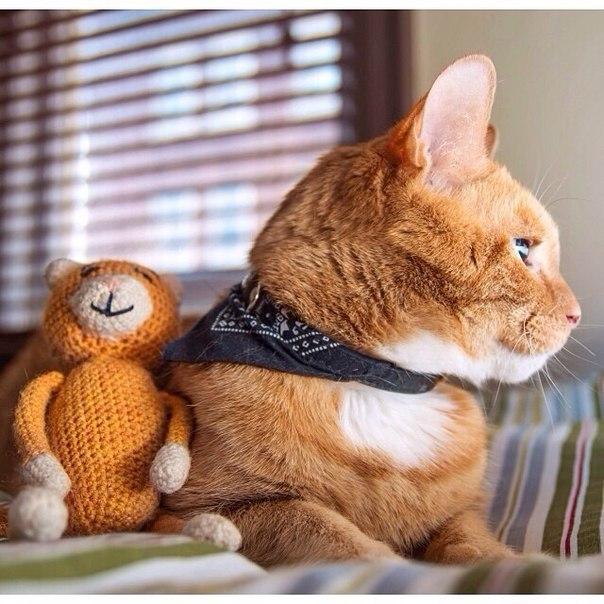 Милые картинки с котиками - самые удивительные и приятные 3