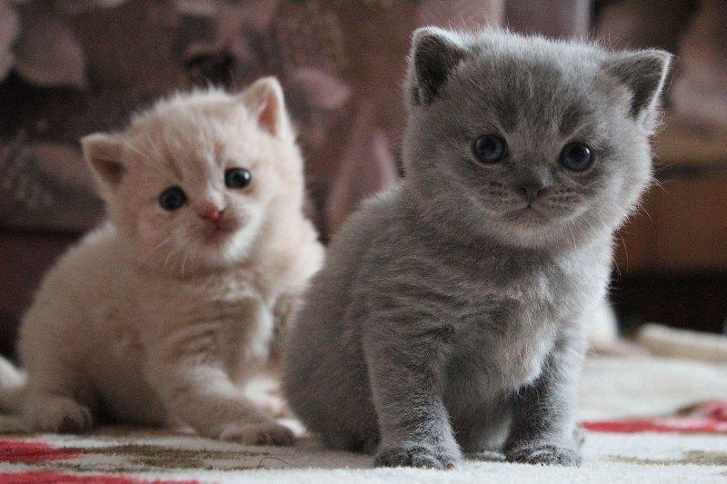 Милые картинки с котиками - самые удивительные и приятные 4