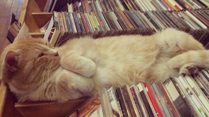 Милые картинки с котиками - самые удивительные и приятные 6