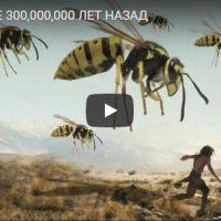Насекомые, которые жили на Земле 300 000 000 лет назад - видео