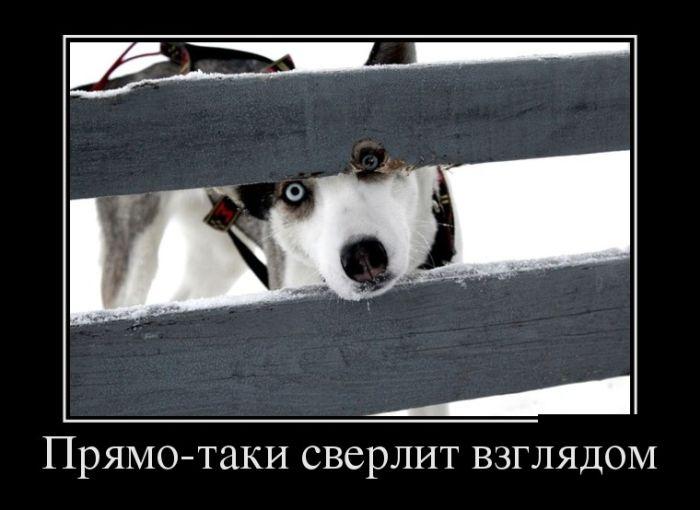 Подборка недельных демотиваторов за март - лучшие фото №24 12