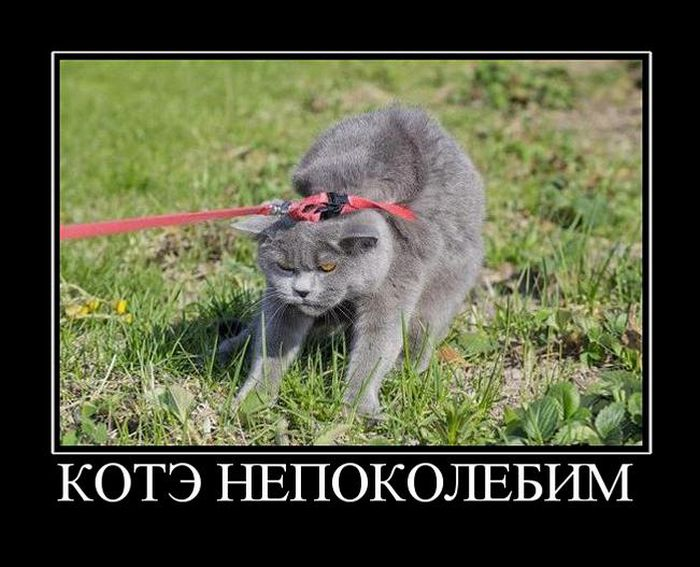 Подборка недельных демотиваторов за март - лучшие фото №24 7