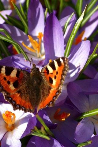 Прикольные и красивые картинки на телефон бабочки - подборка 12