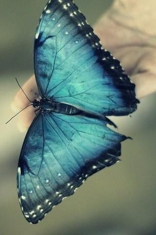 Прикольные и красивые картинки на телефон бабочки - подборка 16