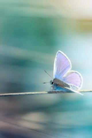 Прикольные и красивые картинки на телефон бабочки - подборка 4