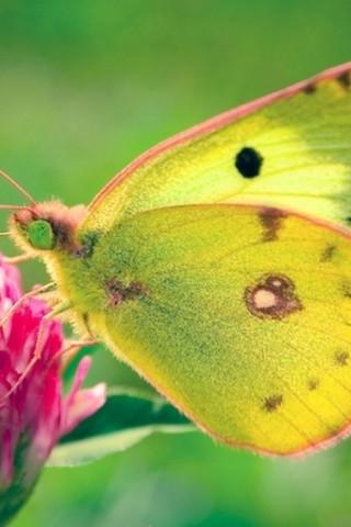 Прикольные и красивые картинки на телефон бабочки - подборка 6