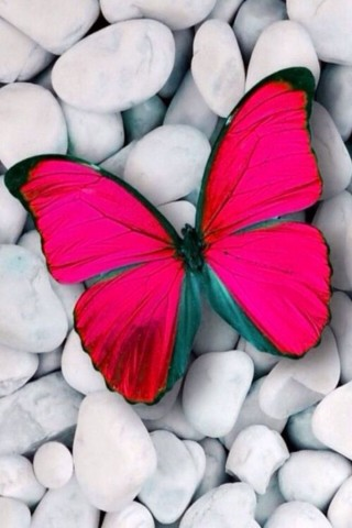 Прикольные и красивые картинки на телефон бабочки - подборка 7