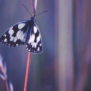 Прикольные и красивые картинки на телефон бабочки - подборка 8