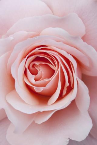 Прикольные и красивые картинки цветов на телефон - скачать бесплатно №2 1