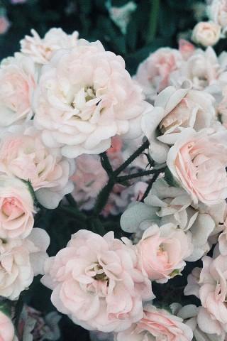 Прикольные и красивые картинки цветов на телефон - скачать бесплатно №2 10