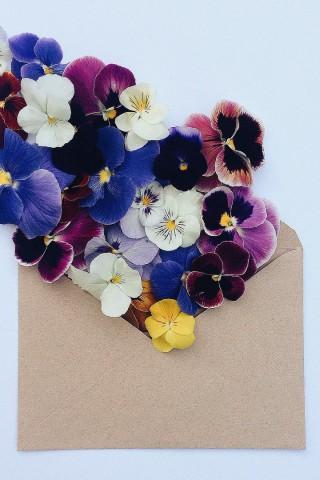 Прикольные и красивые картинки цветов на телефон - скачать бесплатно №2 15