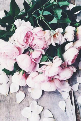 Прикольные и красивые картинки цветов на телефон - скачать бесплатно №2 17