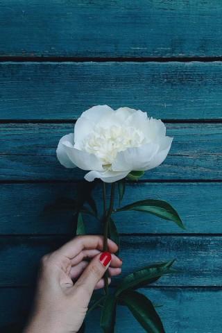 Прикольные и красивые картинки цветов на телефон - скачать бесплатно №2 18