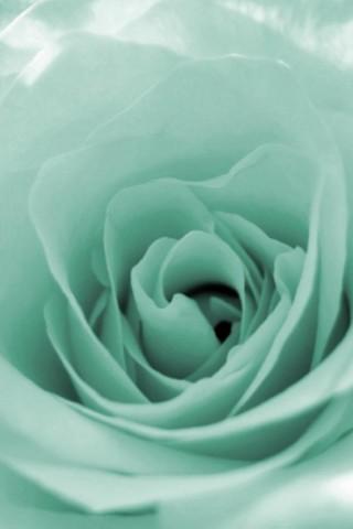 Прикольные и красивые картинки цветов на телефон - скачать бесплатно №2 9