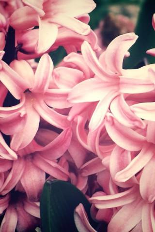 Прикольные и красивые растения картинки на телефон - лучшие №11 14