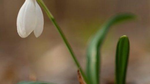 Прикольные и красивые растения картинки на телефон - лучшие №11 17