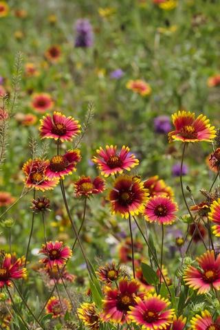 Прикольные и красивые растения картинки на телефон - лучшие №11 2