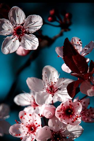 Прикольные и красивые растения картинки на телефон - лучшие №11 3