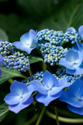 Прикольные и красивые растения картинки на телефон - лучшие №11 4