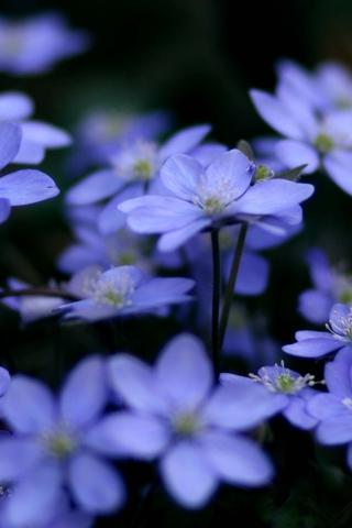 Прикольные и красивые растения картинки на телефон - лучшие №11 7