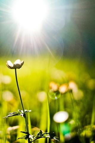 Прикольные и красивые растения картинки на телефон - лучшие №11 9