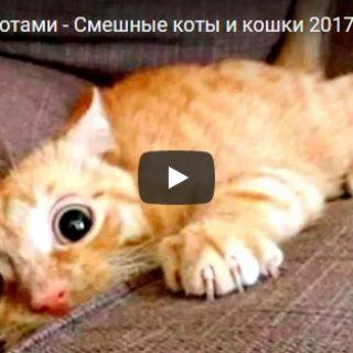 Смешные и ржачные видео приколы про котов и кошек 2018 - подборка №94