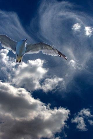 Картинки на телефон небо, облака, солнце - очень красивые и крутые 19