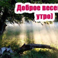 Картинки с весенним добрым утром и днем - красивые и прикольные 9