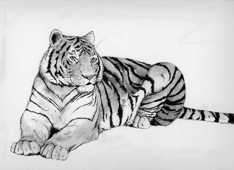 Для, картинки белого тигра для срисовки