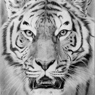 Картинки тигра для срисовки карандашом - красивые и прикольные 8