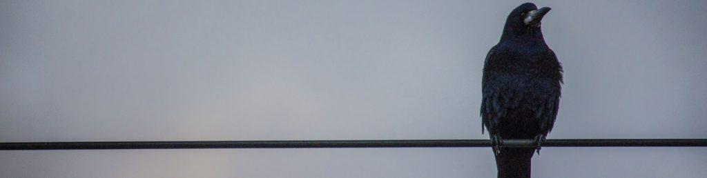 Красивые картинки для обложки в ВК 1590х400 - коллекция картинок 6