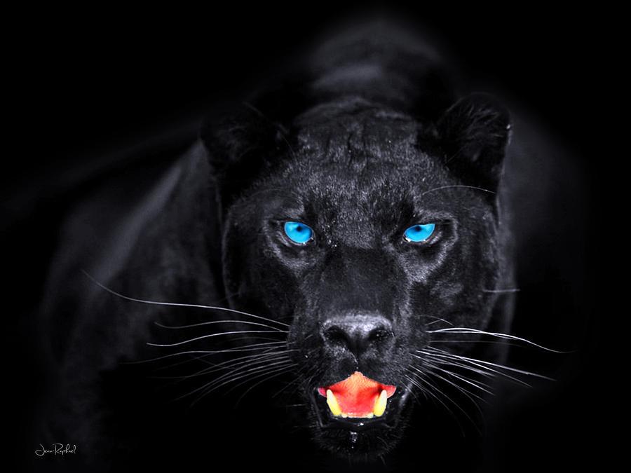 Красивые картинки на аву пантера - самые прикольные и классные 18