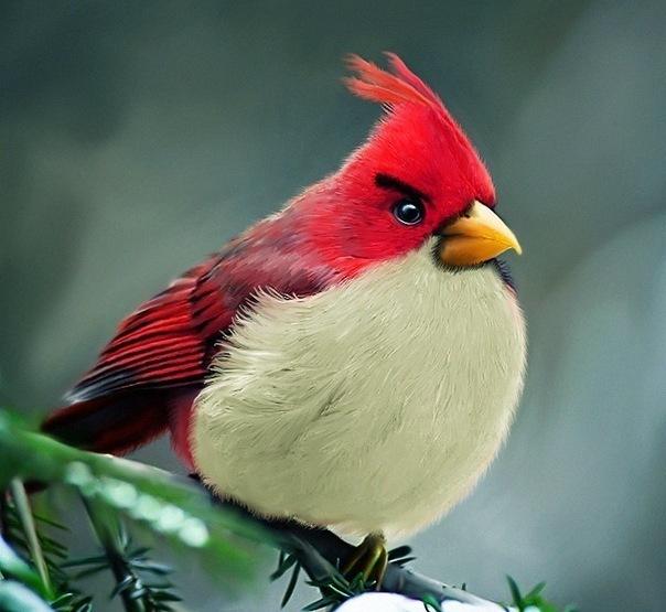 Прикольные и смешные птицы - картинки и фотографии с надписями 11