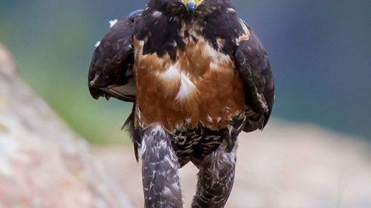Прикольные и смешные птицы - картинки и фотографии с надписями 12