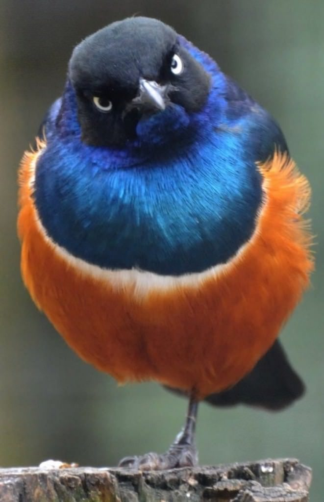 Прикольные и смешные птицы - картинки и фотографии с надписями 13