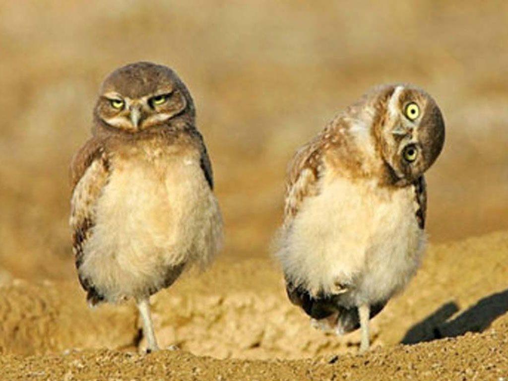 Прикольные и смешные птицы - картинки и фотографии с надписями 5