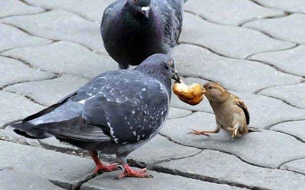 Прикольные и смешные птицы - картинки и фотографии с надписями 9