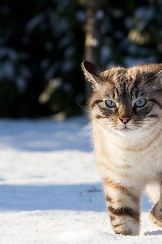 Скачать картинки котиков на телефон - лучшая сборка изображений 10