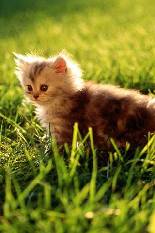 Скачать картинки котиков на телефон - лучшая сборка изображений 14