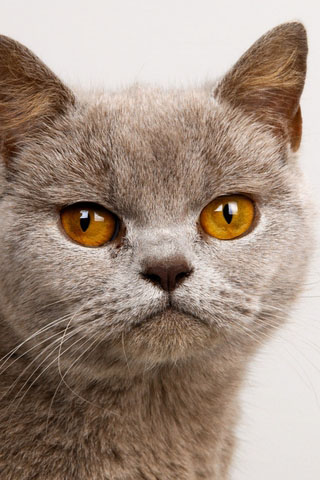 Скачать картинки котиков на телефон - лучшая сборка изображений 17