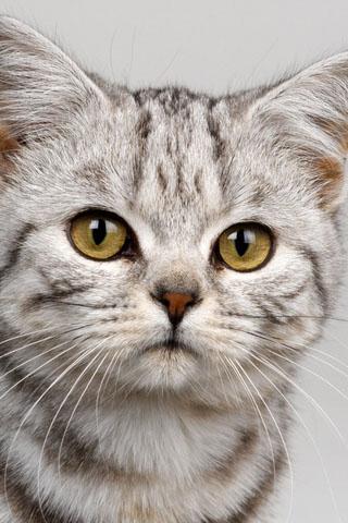 Скачать картинки котиков на телефон - лучшая сборка изображений 18
