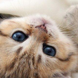 Скачать картинки котиков на телефон - лучшая сборка изображений 20