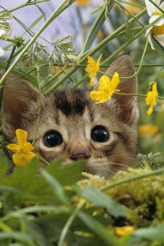 Скачать картинки котиков на телефон - лучшая сборка изображений 4