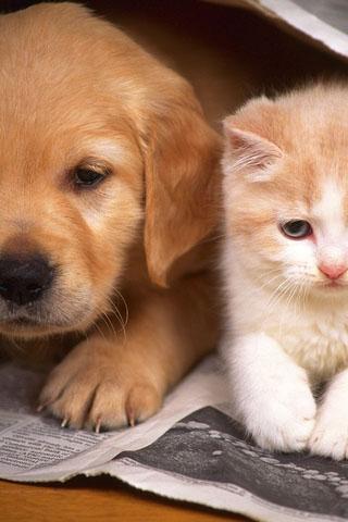 Скачать картинки котиков на телефон - лучшая сборка изображений 5
