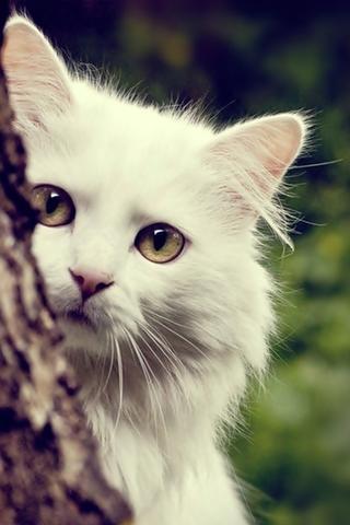 Скачать картинки котиков на телефон - лучшая сборка изображений 7