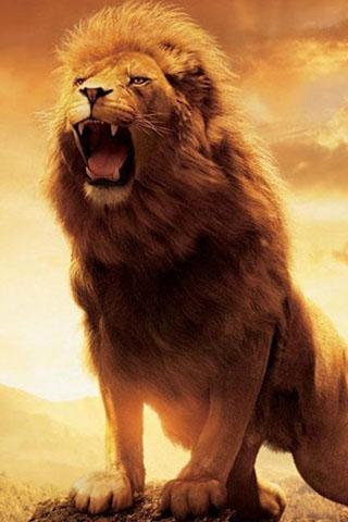 Скачать картинку лев на телефон на главный экран - лучшая сборка 12