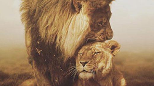 Скачать картинку лев на телефон на главный экран - лучшая сборка 16