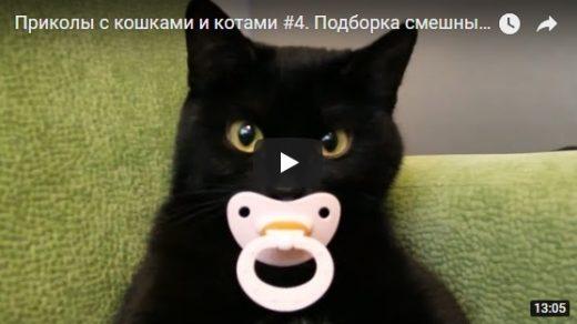 Смешные видео про котов и кошек - самые лучшие и прикольные