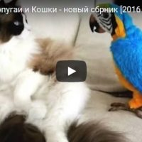 Смешные видео про попугаев до слез - лучшая подборка приколов