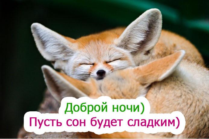 Спокойной ночи картинки - прикольные и смешные с надписями 8